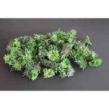 Scenic Textures Fern & Undergrowth T7